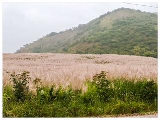 fields white